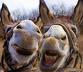 Donkeys-270